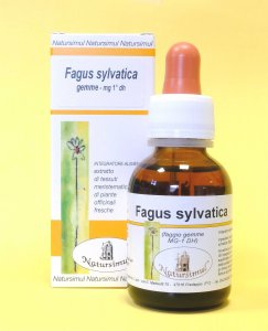 Fagus sylvatica gemme M.G. (Faggio)