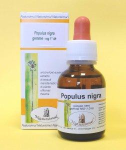 Populus nigra gemme M.G. (Pioppo nero)