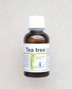 Tea Tree (Melaleuca alternifolia - Albero del Tè)