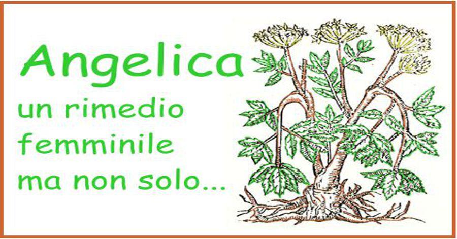 Angelica, un rimedio femminile, ma non solo...